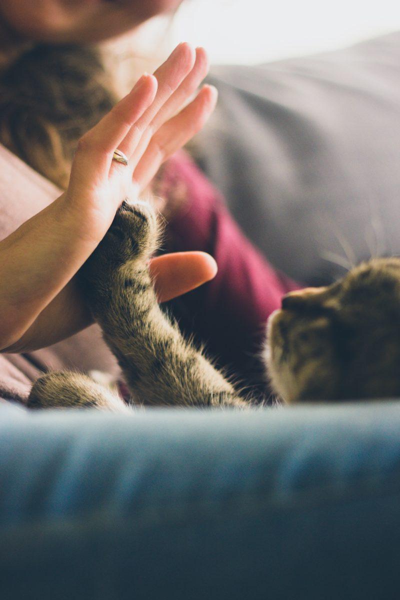 吉沢亮が猫を抱くもので変わったこと!?
